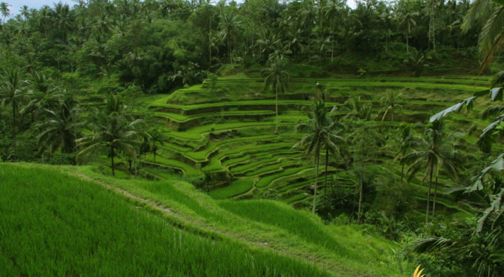 Bali Island Geographical Information
