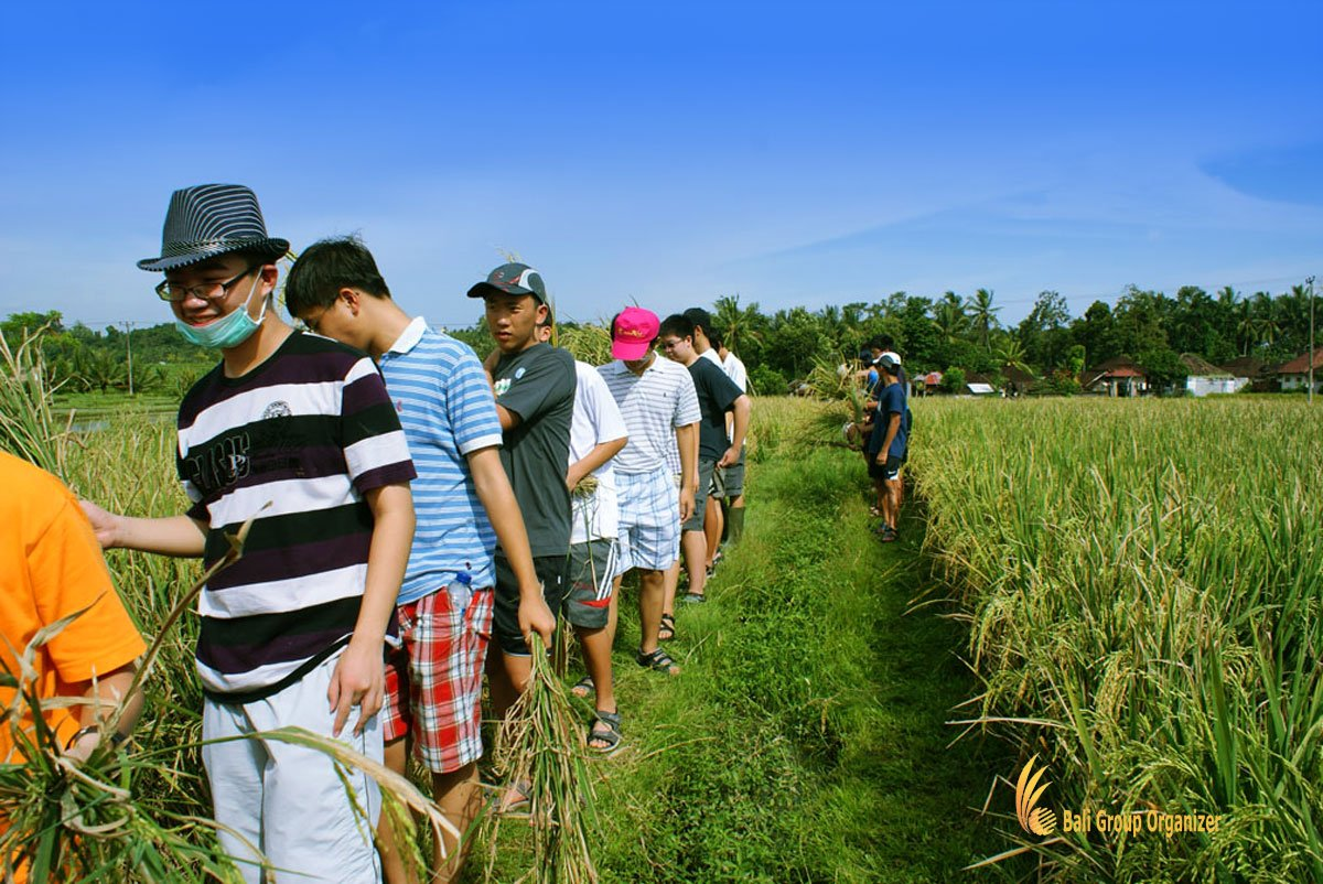 bali, farming, activities, planting