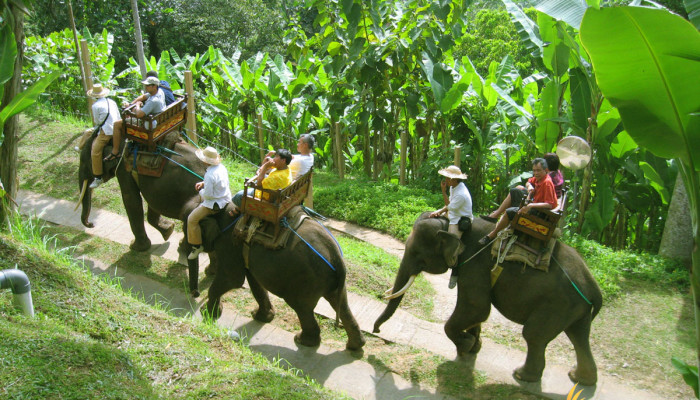 Bali Elephant Ride Safari