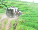 bali, land cruise, rice field, track