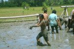 bali, muddy, land, team, building, eel, catching