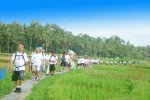 rice, field, bali, muddy, land, team, building
