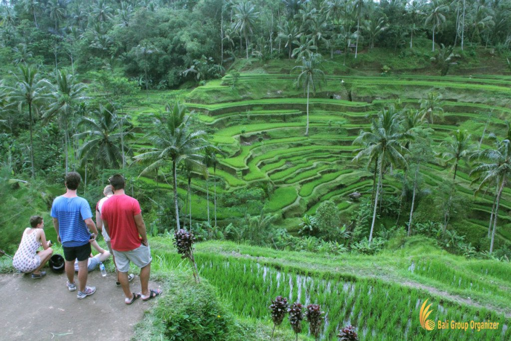 tegalalang, rice, terrace, view, ubud