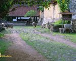 tenganan, ancient, traditional, village, east, bali
