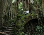 ubud, monkey, forest, bridge