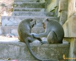 uluwatu, temple, monkeys
