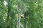 flying fox bali, bali treetop adventure, warisan group