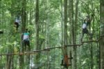warisan group, monkey track, group monkey track, bali treetop