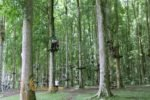 bali treetop, bali treetop adventure, warisan group, warisan group team building