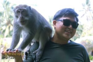 bali monkey forest, temasek, temasek international