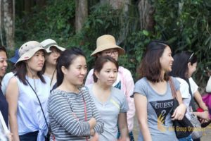 visit sangeh, sangeh monkey forest, temasek, temasek international