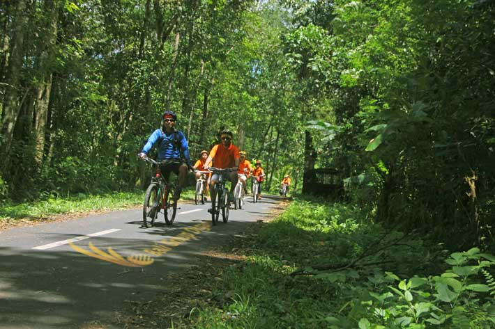 bali incentive trip weebz mandiri experienced bali jungle trails, bali jungle cycling trails, weebz mandiri, weebz mandiri group